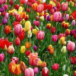 tendenze arredo per la primavera sim immobiliare